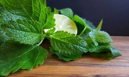 Zitronenmelissen-Sirup mit Limetten