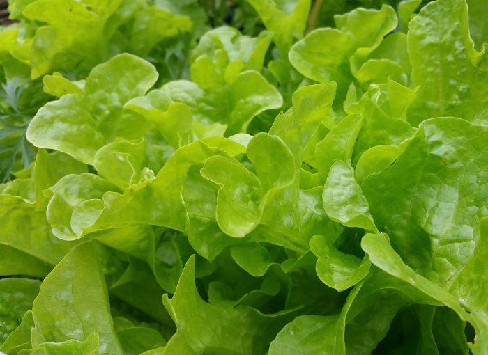 Die Sache mit dem Salat