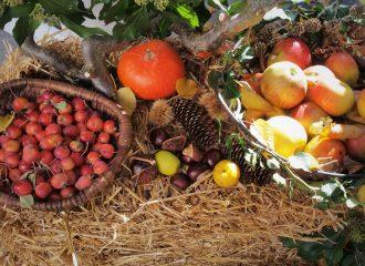 Blogevent Herbstgenuss - 26 herbstliche Rezepte von Bloggern zum Nachkochen #rezepte #herbst #kochen #backen #essen